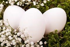 Einfache undecorated Ostereier in einem Nest Stockbild