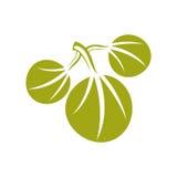 Einfache Vektorikone mit drei Federblättern, Natur und Gartenarbeitthema Stockfotografie