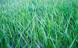 Einfacher abstrakter Hintergrund von der Oberfläche eines grünen Grases Stockfotografie