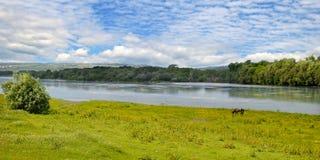 Einfacher Fluss-, Wiesen- und Floodplainwald Stockbild