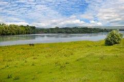 Einfacher Fluss-, Wiesen- und Floodplainwald auf Ufer Lizenzfreie Stockfotos