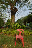 Einfacher roter Plastikstuhl vor einem Baum in einem Park Stockfotografie