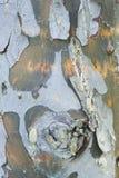 Einfaches Baumdetail der Barke Lizenzfreies Stockbild