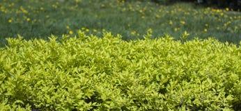 Einfaches Foto eines schönen Feldes im Sommer lizenzfreies stockbild