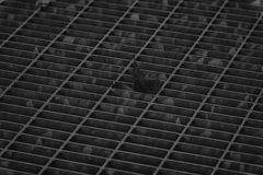 Einfarbige quadratische Metallluke in der städtischen Pflasterung, im Abwasserkanalkanaldeckel mit Markierungslinien und im Blatt Lizenzfreies Stockbild