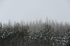 Einfarbige Winterlandschaft Bäume im Schnee, bewölkter Himmel Stockfoto