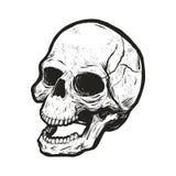 Einfarbiger Schädel mit Schmutzbeschaffenheit Stockfotos