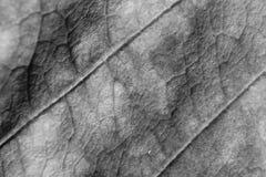 Einfarbiger undeutlicher Makrohintergrund des trockenen Blattes, Fokus auf Mitte des Bildes Stockfotografie