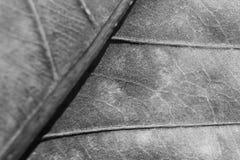 Einfarbiger undeutlicher Makrohintergrund des trockenen Blattes, Fokus auf Mitte des Bildes Stockfoto