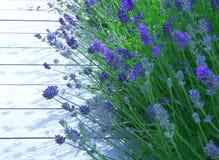 Einfassung im Lavendel Lizenzfreies Stockbild