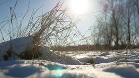 Einflüsse des trockenen Grases in der Windwinter-Schneelandschaft fangen Natursteppe auf stock footage