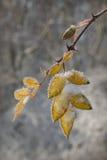 Einfrierende Blätter Stockfotografie