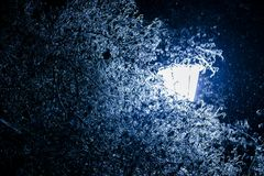 Einfrierende Blätter und Niederlassungen des Eisregens stockfotos