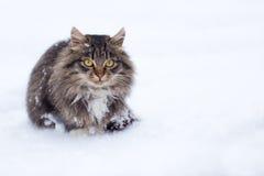 Einfrierende obdachlose Katze im Winter Lizenzfreies Stockbild