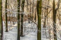 Einfrierender Tag Nachtfolgend schneesturm Stockbild