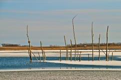 Einfrierendes Wasser stellt Insel von Bäumen her lizenzfreie stockbilder