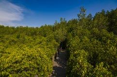Eingang in einem schönen Wald lizenzfreie stockfotografie