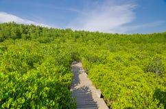 Eingang in einem schönen Wald lizenzfreie stockbilder
