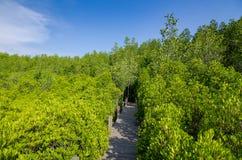 Eingang in einem schönen Wald lizenzfreie stockfotos