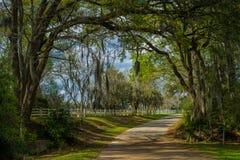 Eingang rosedown Plantage, Louisiana lizenzfreies stockfoto