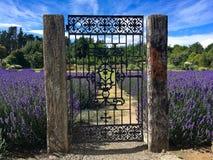 Eingang zu blühendem Lavendelgarten stockfotografie