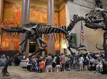 Eingang zum berühmten amerikanischen Naturkundemuseum Stockfotos
