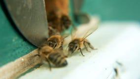 Eingang zum Bienenstock, durchlöchern die Bienen fliegen herein mit Nektar und dem Blütenstaub, landen und fliegen weg in das Fel stock video footage