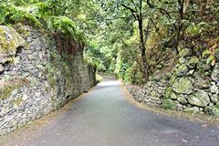Eingang zum Lorbeerwald Los Tilos auf La Palma lizenzfreie stockfotografie