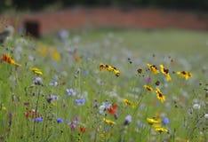 Eingang zum Wildflowerhimmel lizenzfreie stockfotos