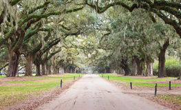 Eingangs-Straße zu Boone Plantation Charleston South lizenzfreie stockfotografie