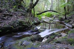 Eingeborene Waldszene - Südafrika Stockfotos