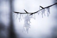 eingefroren Stockbild