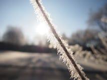 eingefroren stockbilder