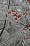 Eingefroren in der Zeit lizenzfreies stockfoto