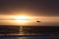 Eingefroren durch die goldene Sonne Stockfotografie