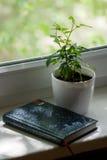 Eingemacht stieg auf das Fensterbrett mit dem Tagebuch Lizenzfreie Stockfotos