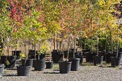 Eingemachte Bäume an der Baumschule Lizenzfreies Stockfoto