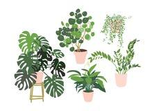 Eingemachte Betriebsansammlung Succulents und Zimmerpflanzen stockbild