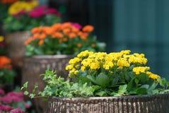 Eingemachte Blumen Stockfotos