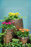 Eingemachte Blumen Lizenzfreie Stockfotografie
