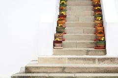 Eingemachte Blumen auf Treppe und weißen Wänden an Cozia-Kloster in Rumänien Stockbilder