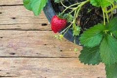 Eingemachte Erdbeere auf hölzernem Hintergrund stockfotos