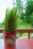 Eingemachte Grasbänder, Weihnachtsgeschenk lizenzfreies stockbild