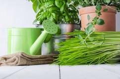 Eingemachte Küchen-Kräuter Stockfotografie