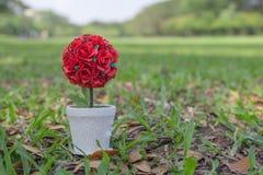 Eingemachte rote Rosen gesetzt auf Holzfu?boden- und Kopienraum Der Hintergrund ist ein Garten Rote Rosen ?bermitteln Liebe Rote  lizenzfreie stockbilder