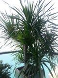 Eingemachte Zimmerpflanze Stockbilder
