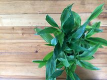 Eingemachtes Gras ist auf Holztisch Stockbild