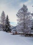 Eingeschneite Bäume in Österreich Stockfoto