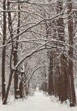 Eingeschneiter Winterwald Lizenzfreies Stockbild