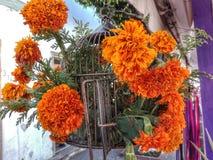Eingesperrte Blumen Lizenzfreies Stockfoto